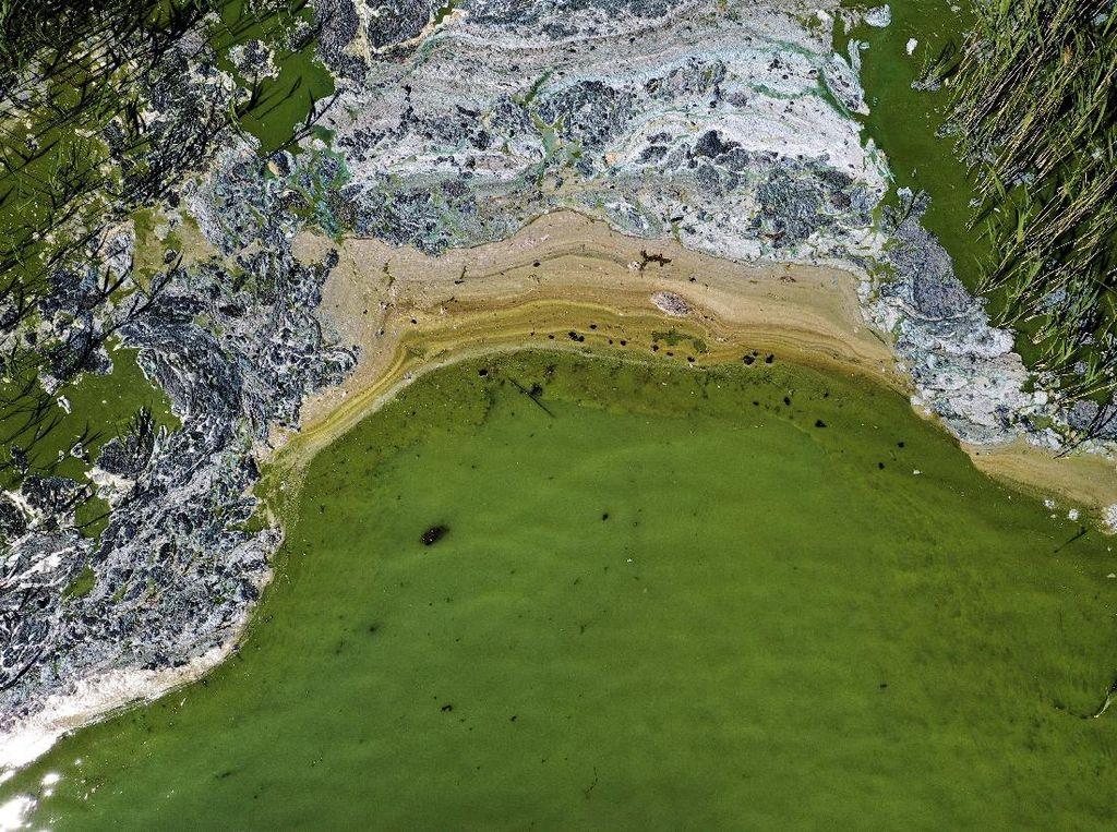 Potret Alga Beracun di Laut Baltik