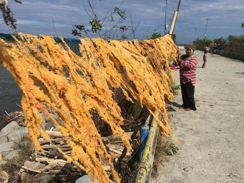 Nelayan di Polman Panen Telur Ikan, Harganya Capai Rp 400 Ribu Per Kg