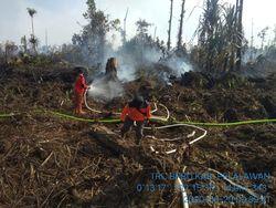 Kebakaran Lahan Gambut di Pelalawan Riau Sudah Bisa Dikendalikan