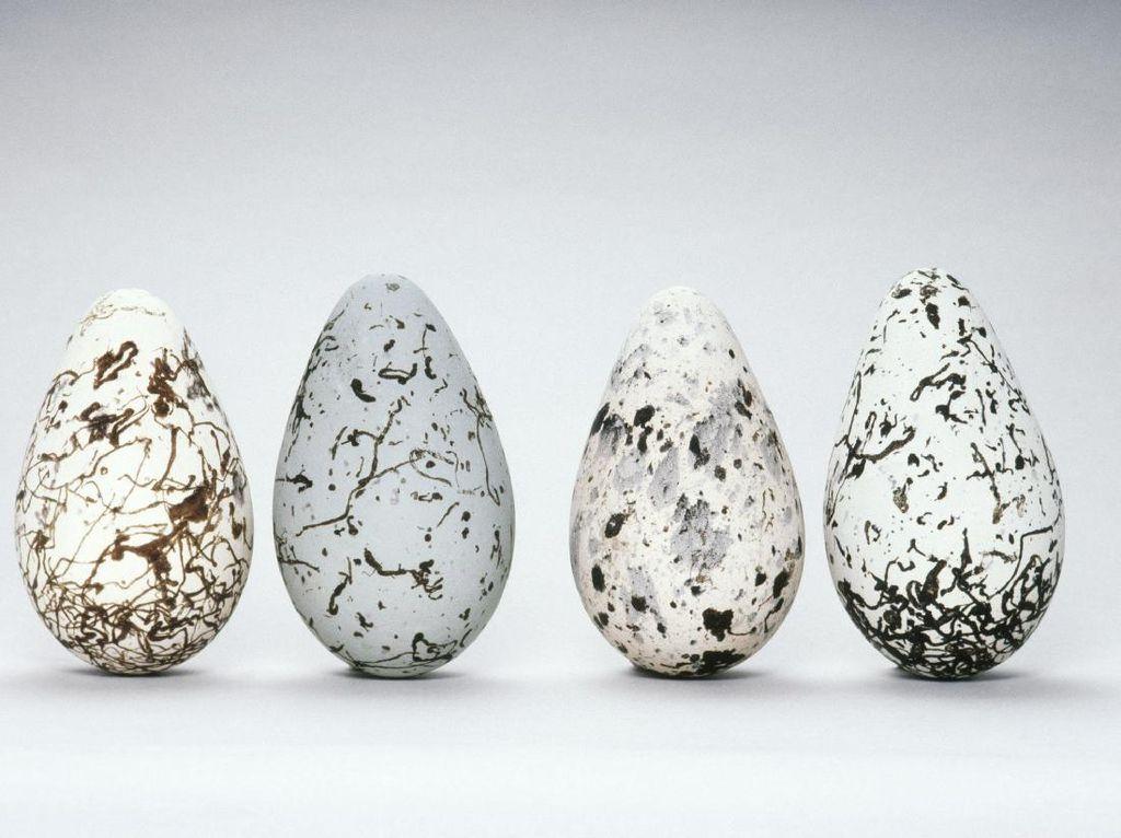 5 Telur Unggas yang Punya Warna Cantik dan Tampilan Indah