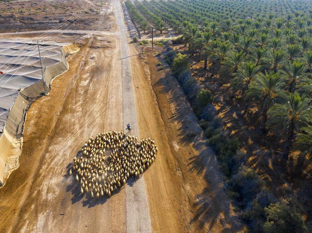 Belum Ada Lampu Hijau dari AS, Israel Beri Sinyal Tunda Pencaplokan Tepi Barat