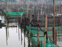 Intip Geliat Budidaya Ikan Hias di Bogor