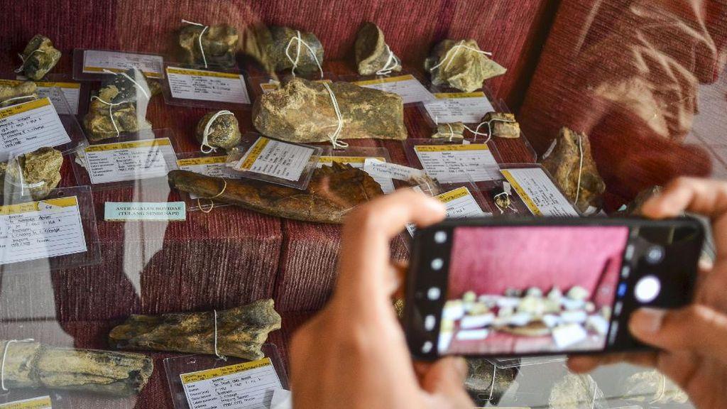Ciamis Punya Beragam Fosil Hewan Purba Berusia Ribuan Tahun Lho