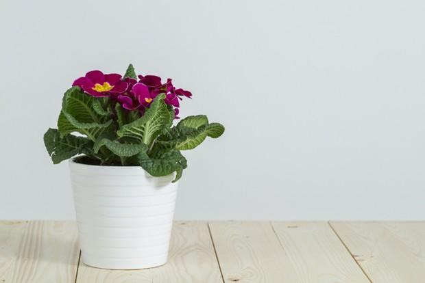 Pot tanaman
