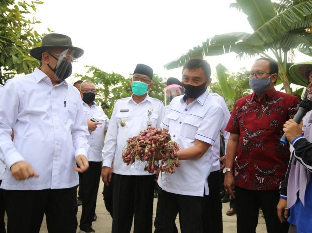 Bantu Petani, Teten Perintahkan LPDB-KUMKM Gandeng Koperasi Simpan Pinjam