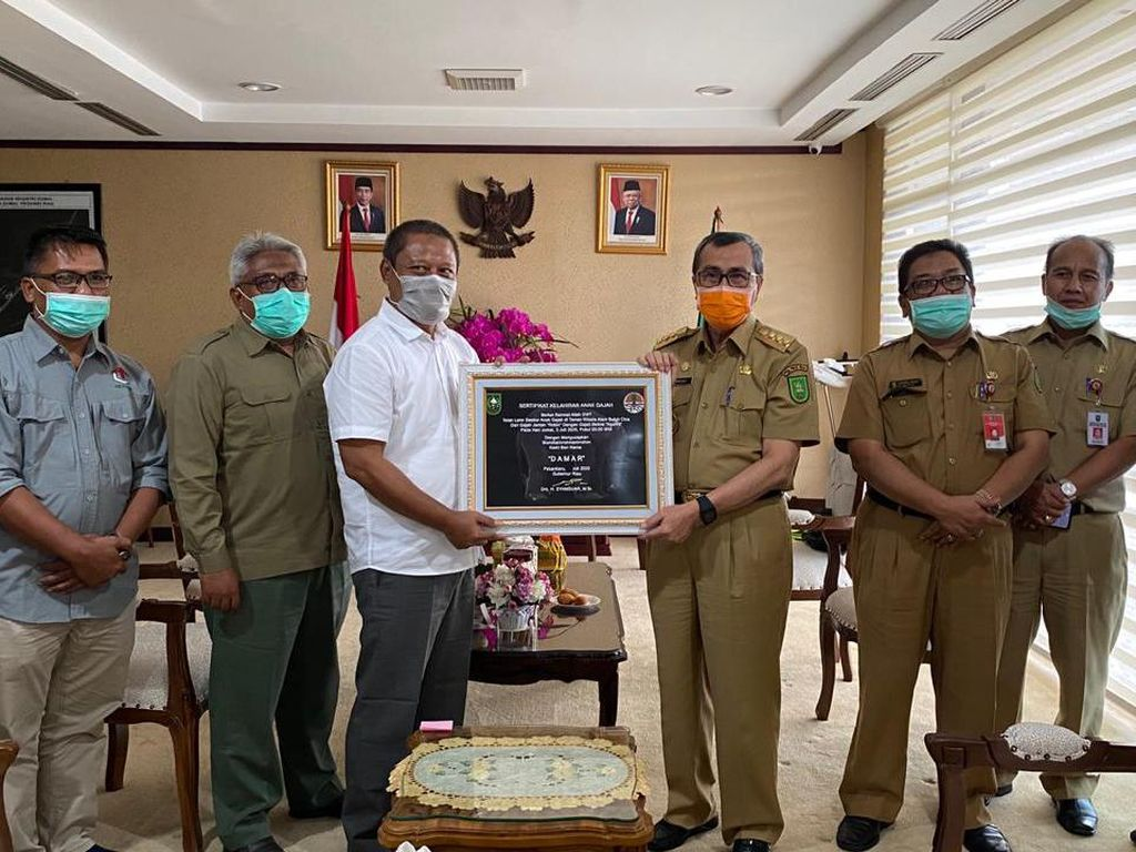 Gubernur Riau Berikan Akta Lahir untuk Bayi Gajah Bernama Damar