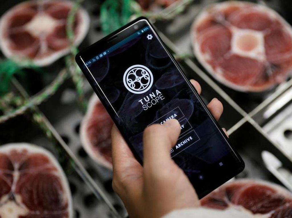 Keren! Aplikasi Ini Bisa Cek Kualitas Ikan Tuna Lewat Teknologi AI