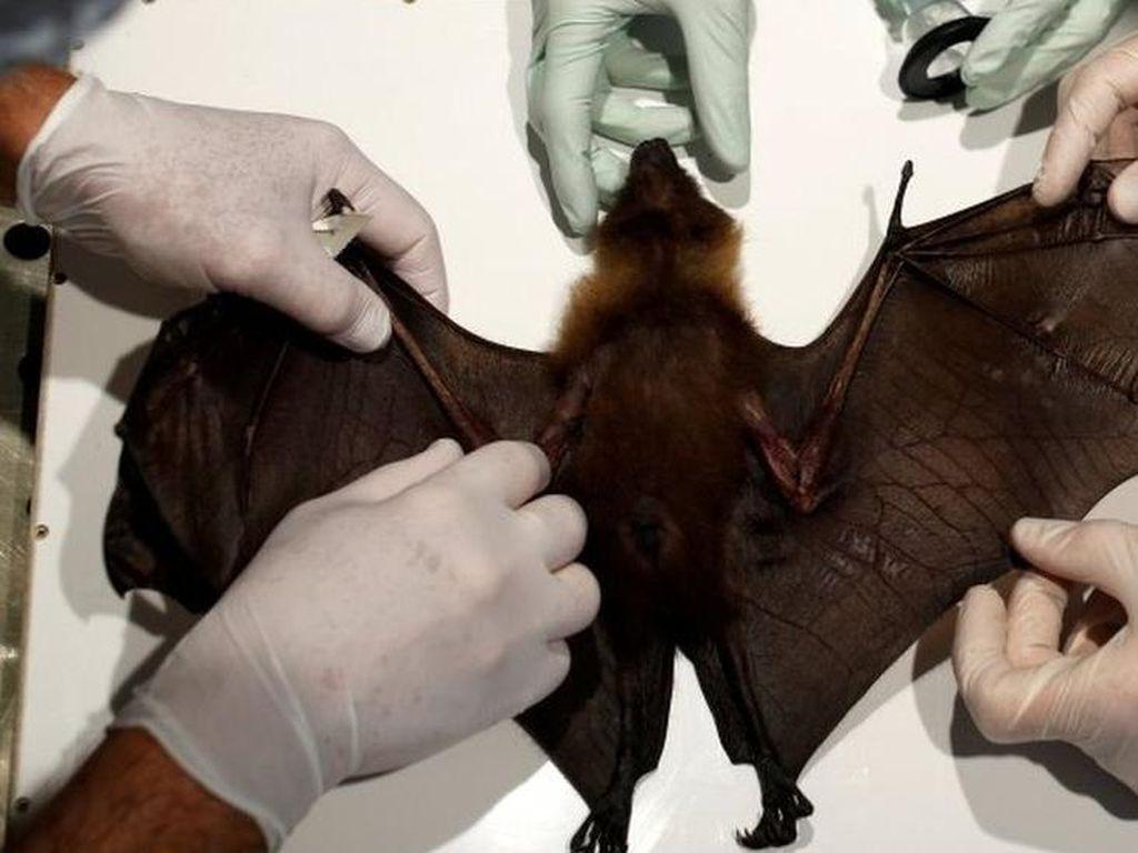PBB: Penyakit yang Berpindah dari Hewan ke Manusia Akan Terus Bertambah