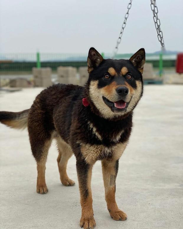 Anjing Peliharaan Jeongyeon TWICE/ Foto: Koreaboo