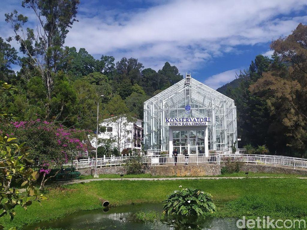 Baru Dibuka Kembali, Ini Spot Instagramable Kebun Raya Cibodas