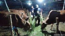 Pandemi Corona Belum Usai, Penjualan Hewan Kurban di Surabaya Turun
