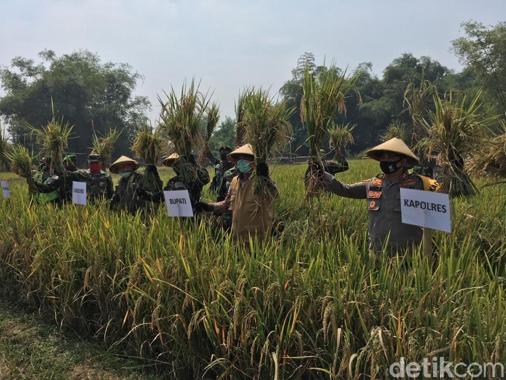 Kampung di Mojokerto Hasilkan 7,4 Ton Gabah Atasi Dampak Ekonomi COVID-19