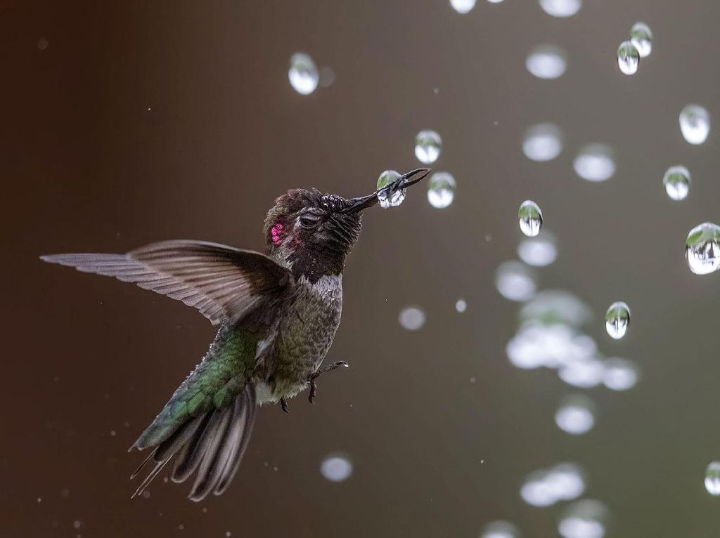 Keindahan Burung dalam Tangkapan Jawara Kontes Audubon Photography Awards
