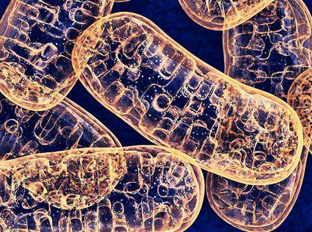 Ilmuwan Berhasil Temukan Cara Ubah DNA