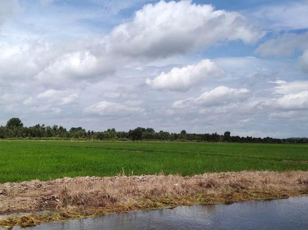 Kementan Targetkan 1 Juta Hektare Untuk Lumbung Pangan