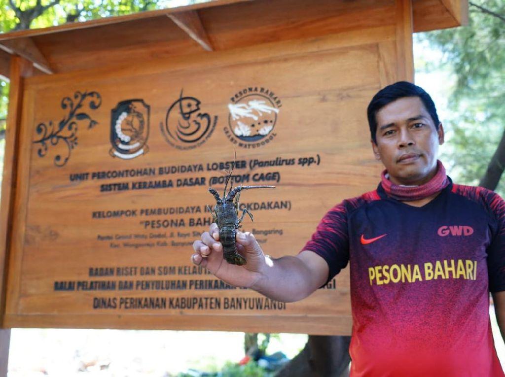 Nelayan Pantura Dukung Menteri Edhy Cabut Aturan Tangkap Benih Lobster