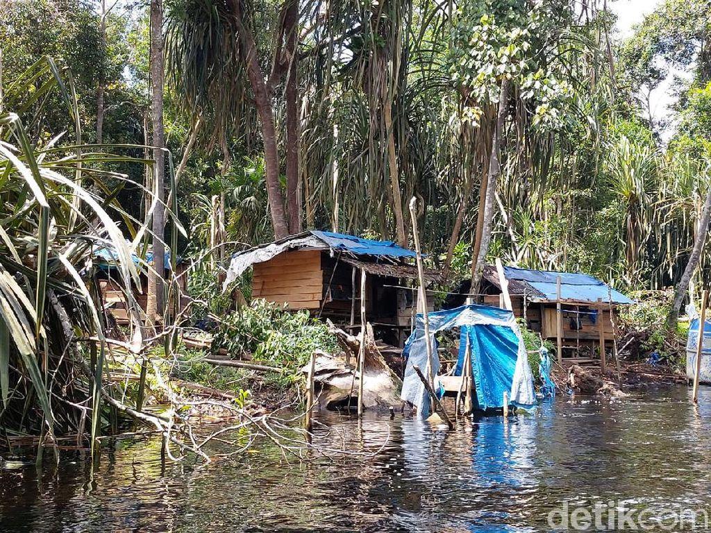 Perambahan Kawasan Hutan di Kabupaten Siak Riau Marak!