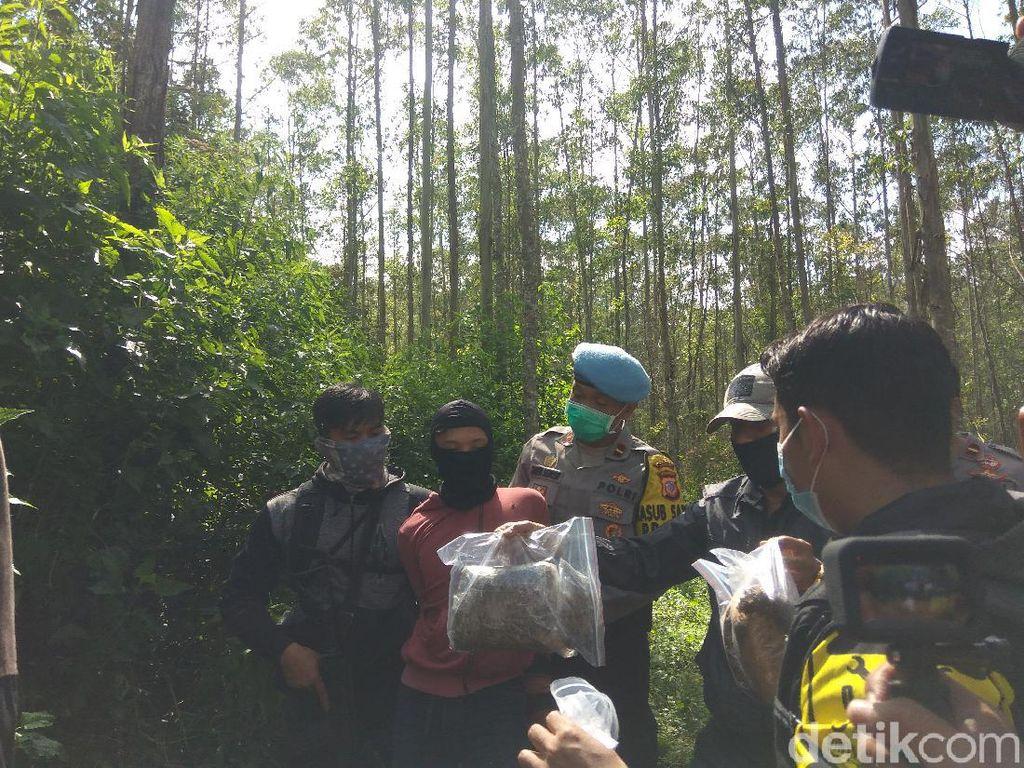 Polisi Ungkap 1 Hektare Ladang Ganja di Perbukitan Bandung