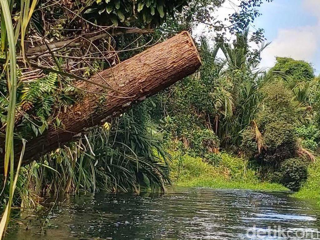 Polri: Perusahaan Illegal Logging di Kalteng Jual Kayu ke Surabaya