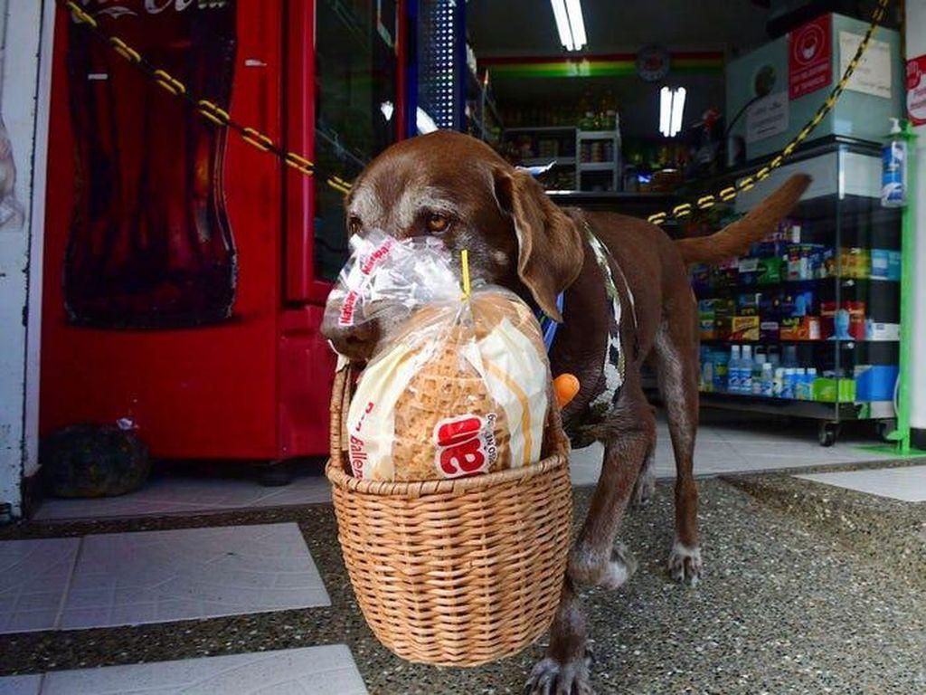 Ini Eros, Anjing 8 Tahun yang Bekerja Sebagai Pengirim Makanan
