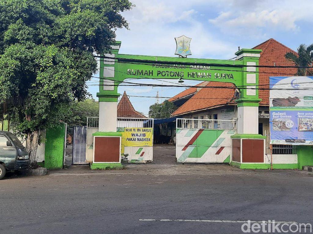 Ini Protokol Kesehatan Penyembelihan Hewan Kurban di RPH Surabaya