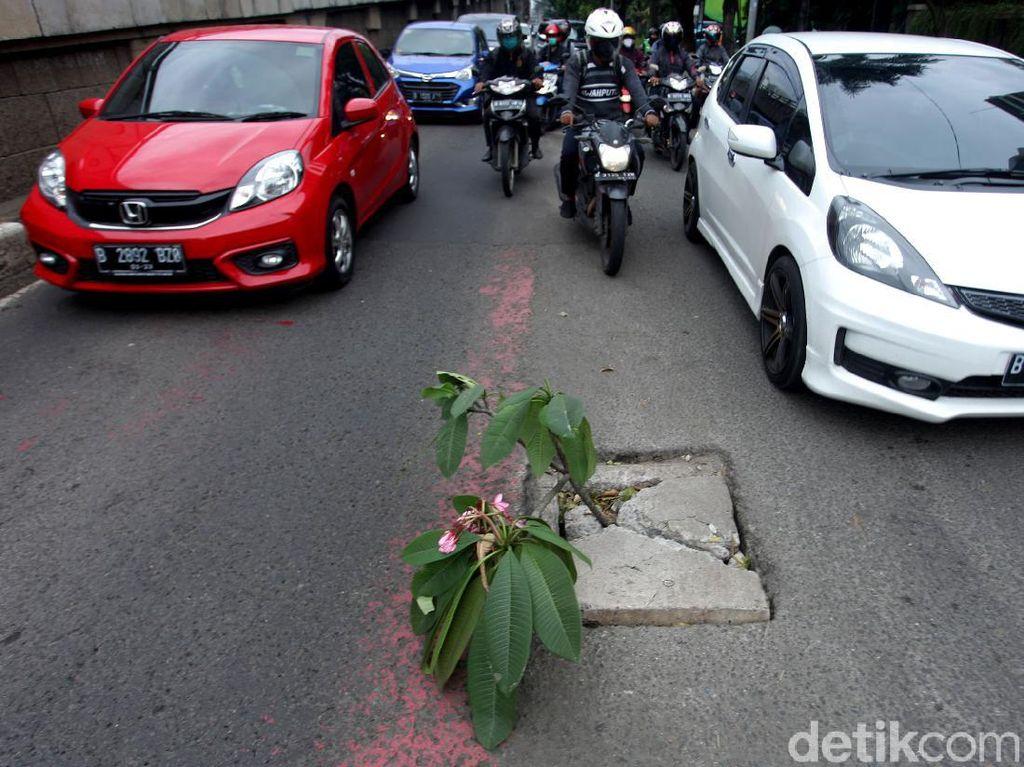 Waduh, Kok Ada Tanaman di Tengah Jalan Jakarta