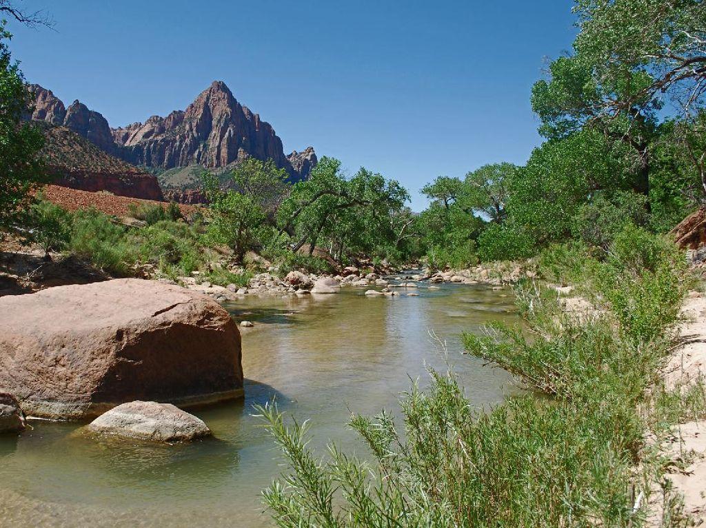 Sungai di AS Tercemar Bakteri, Sebabkan Anjing Mati