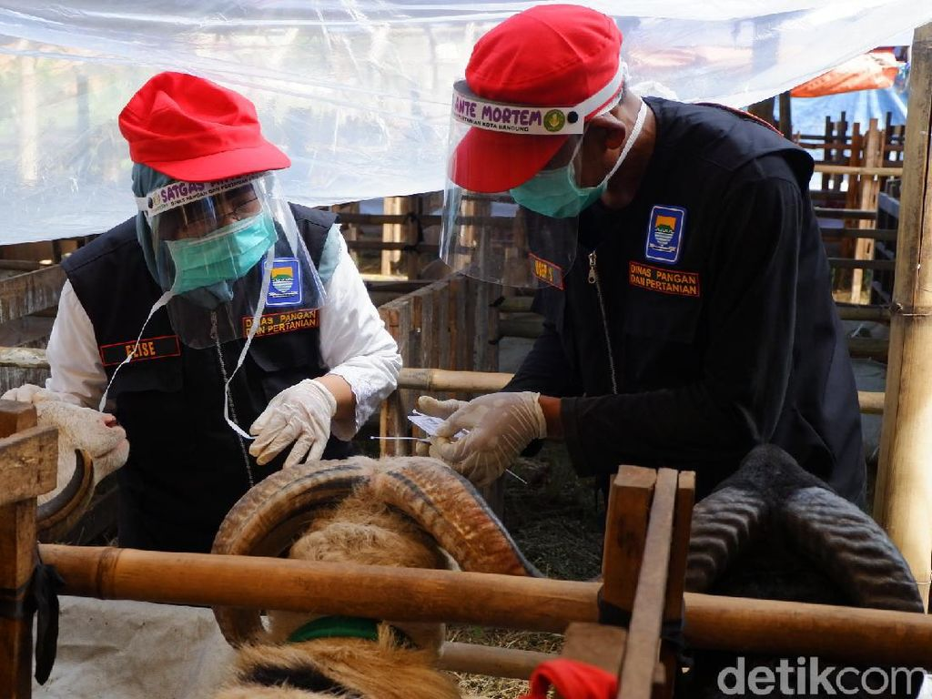 Berjualan di Trotoar,  50 Penjual Hewan Kurban di Bandung Ditertibkan