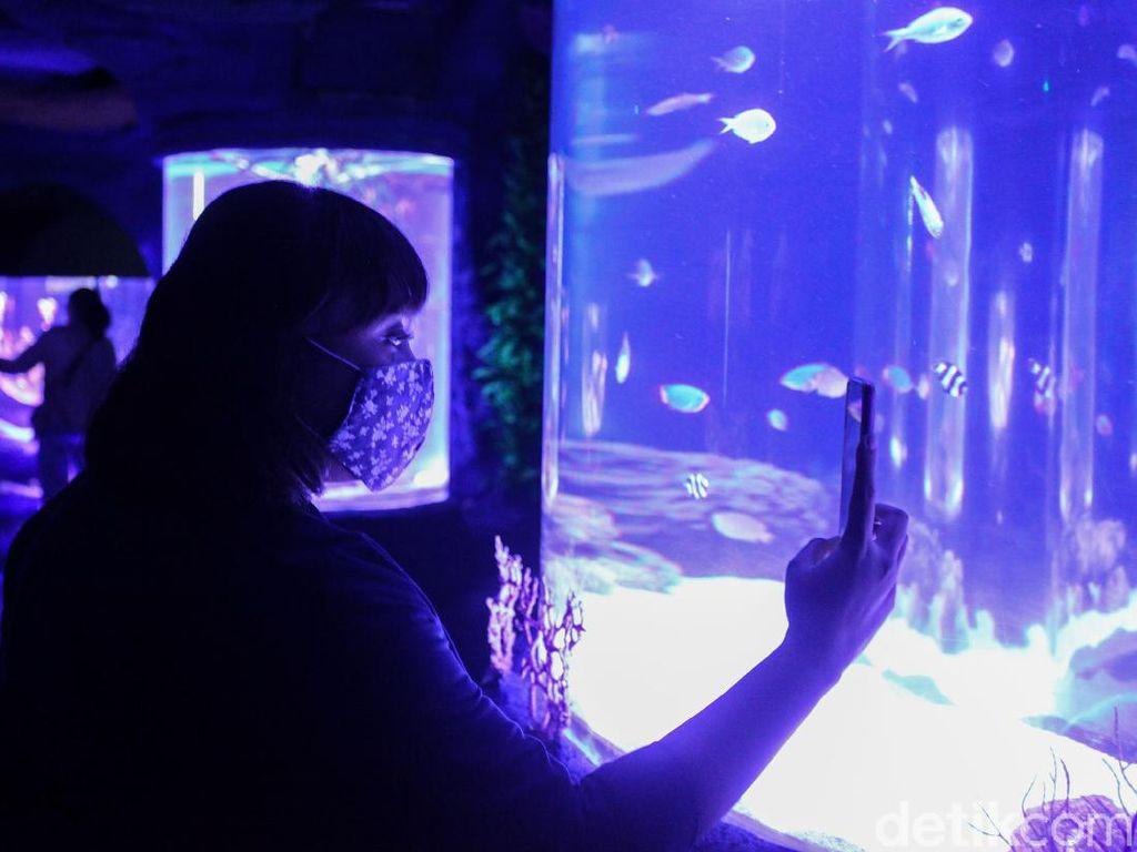 Jakarta Aquarium: Harga Tiket, Lokasi, dan Jam Buka