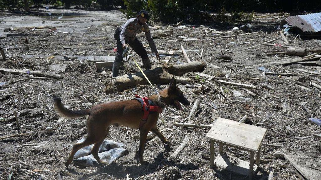Anjing Pelacak Ikut Bantu Cari Korban Banjir Luwu Utara