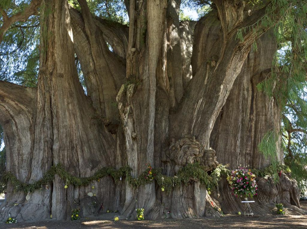 Potret 14 Pohon Tercantik dan Paling Unik di Dunia