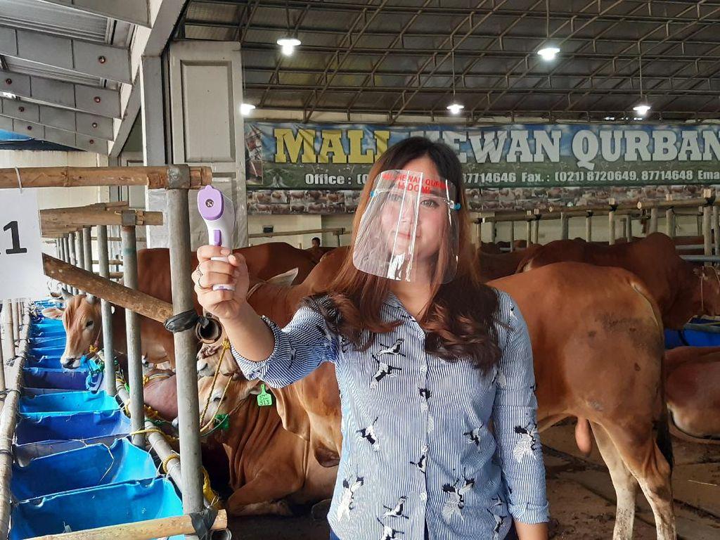 Maaf! Tahun Ini Tak Ada Cowgirl Jajakan Hewan Kurban Gegara Corona