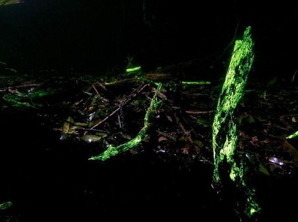 Kisah Hutan yang Bercahaya, Western Ghats