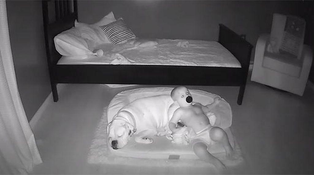 Gemes! Aksi Anak Kecil Tidur Bareng Anjingnya Terekam CCTV