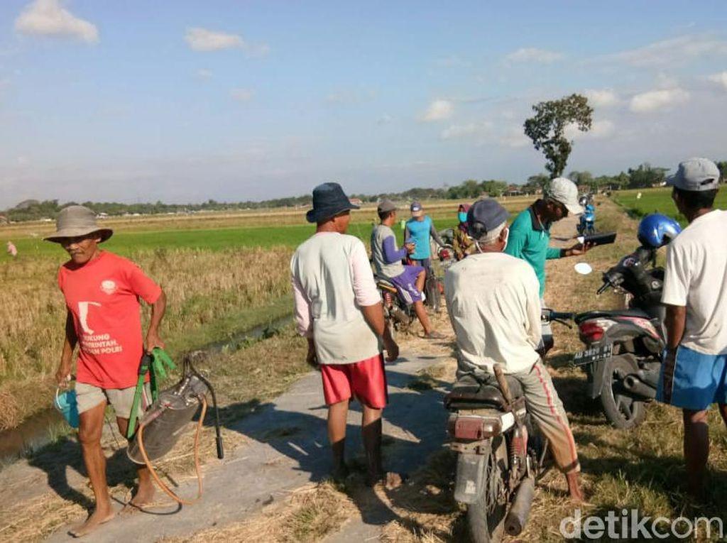 Ratusan Hektare Padi Diserbu Wereng, Petani Klaten: Kini Kami Bergelar SH