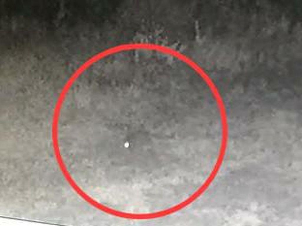 Hewan Diduga Pengisap Darah Ternak di Taput Terekam CCTV, Pencarian Dilanjut