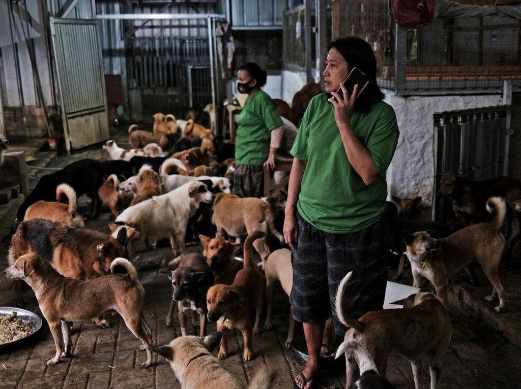 Pejaten Shelter, Surga untuk Anjing Tak Bertuan di Jakarta