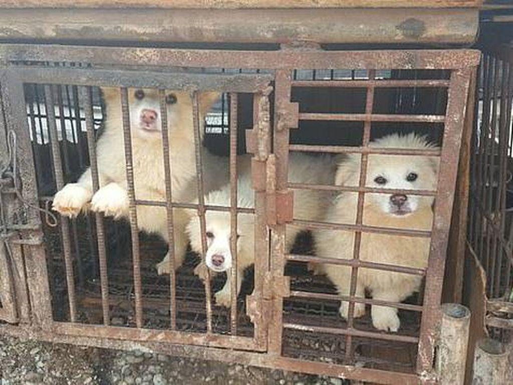 Duh! Masih Banyak yang Makan Sup Daging Anjing di Korea Selatan