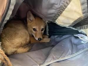 Aksi Heroik Petualang Selamatkan Anjing Hutan yang Nyaris Tenggelam