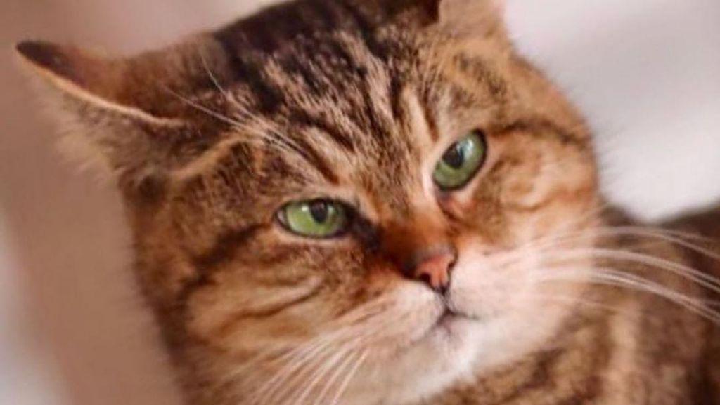 Potret Gli, Kucing yang Tinggal di Hagia Sophia selama 16 Tahun
