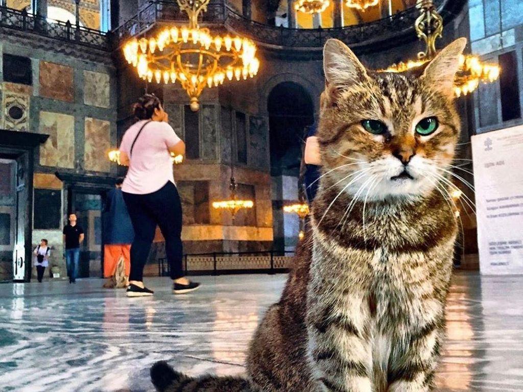 Erdogan Izinkan Gli, Kucing Populer Hagia Sophia Tinggal di Masjid