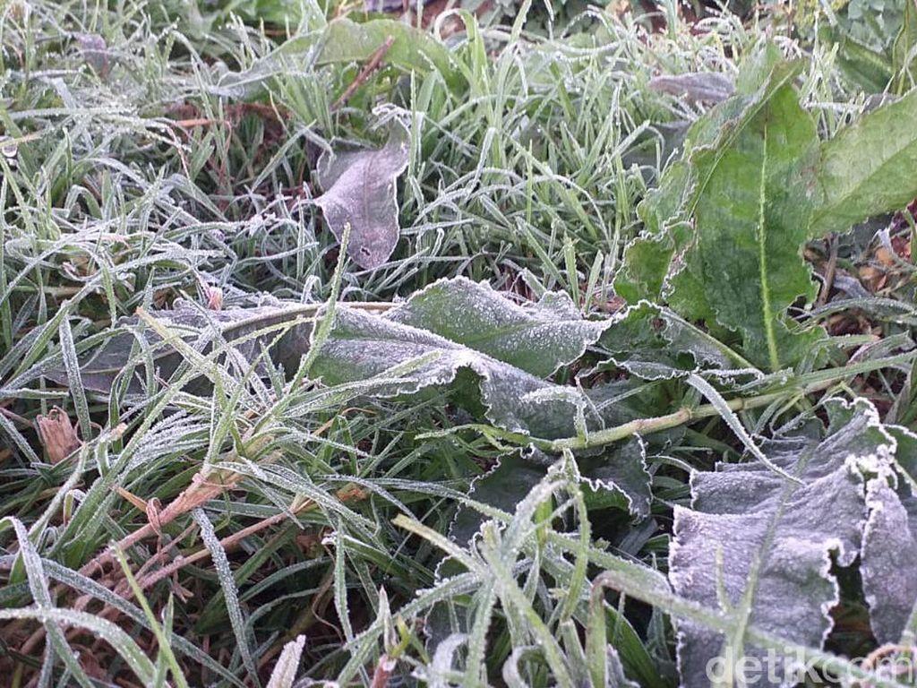 Embun Es Muncul Jelang Pembukaan Wisata Dieng
