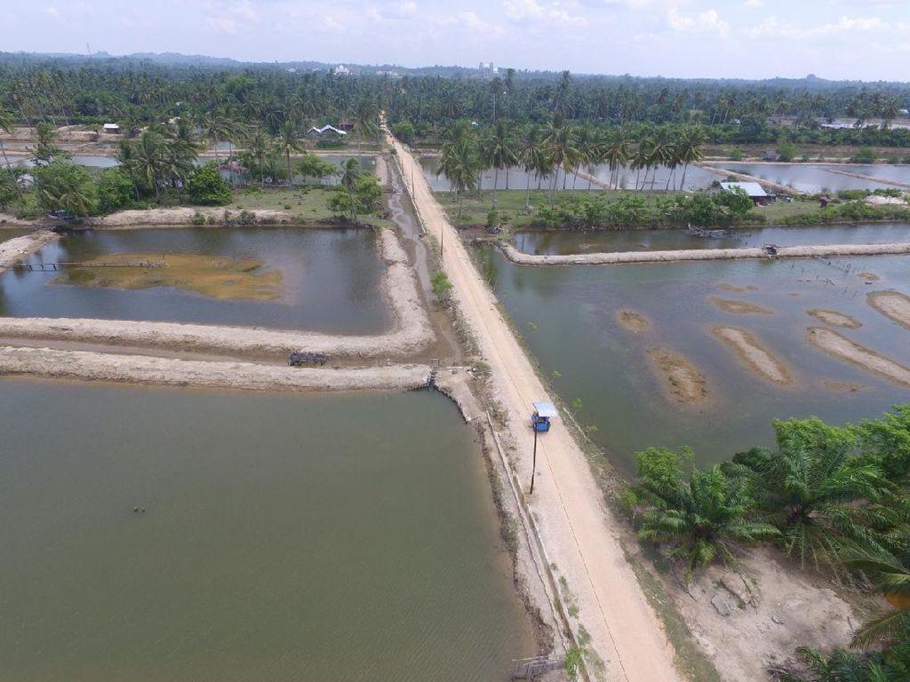 KKPAkan Bangun Model Klaster Tambak Udang Nasional di Aceh Timur