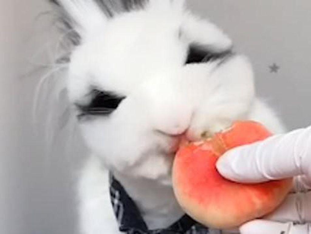 Hobi Bikin Video Makan ASMR, Kelinci Imut Ini Jadi Viral
