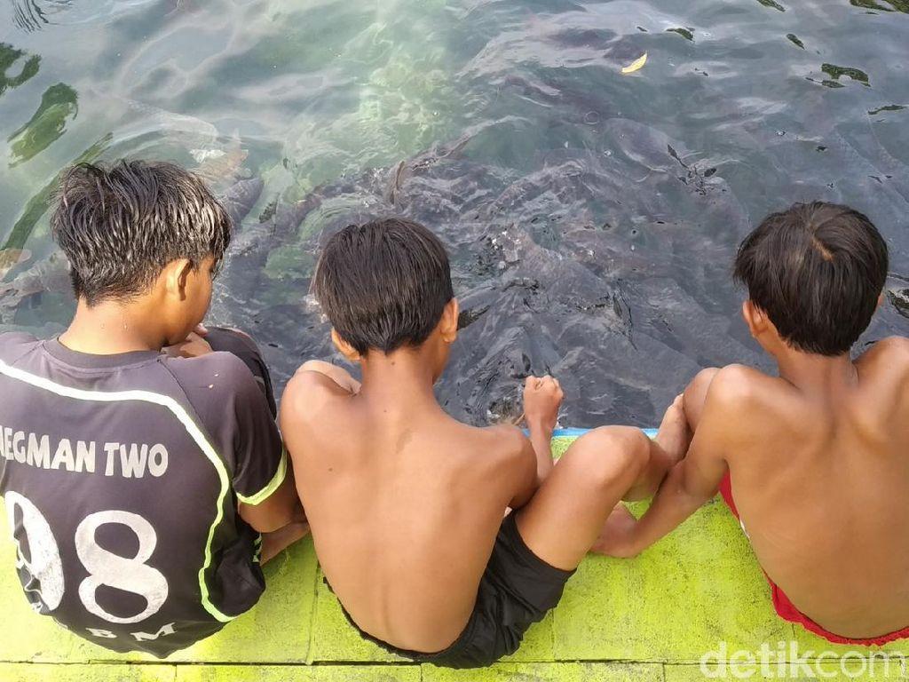 Berenang Bareng Ikan Keramat di Objek Wisata Cibulan