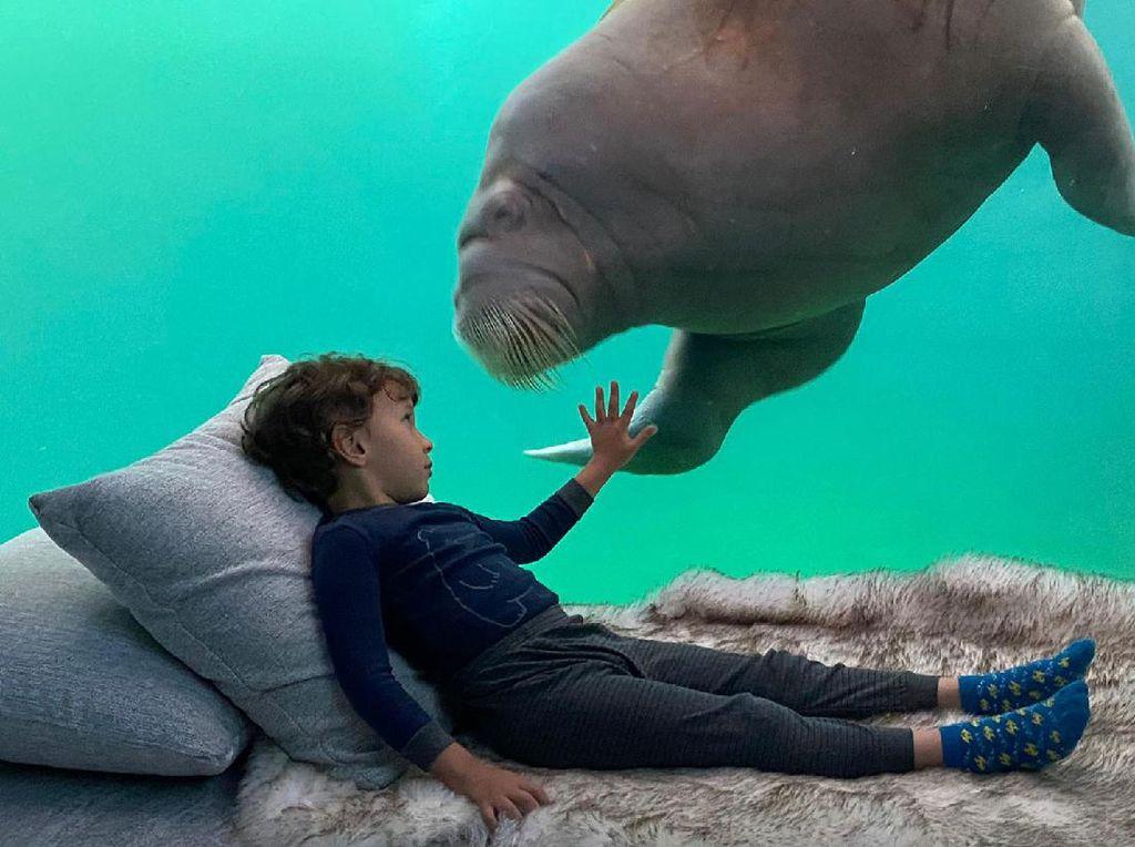 Wah, Hotel Underwater ini Ajak Wisatawan Tidur Ditemani Walrus