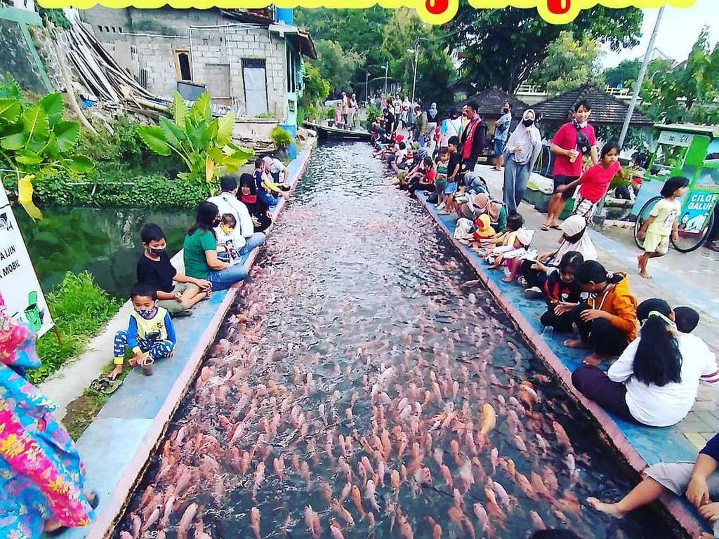 Saluran Irigasi Disulap Jadi Kolam Ikan, Warga Panen Ikan Tiap Hari