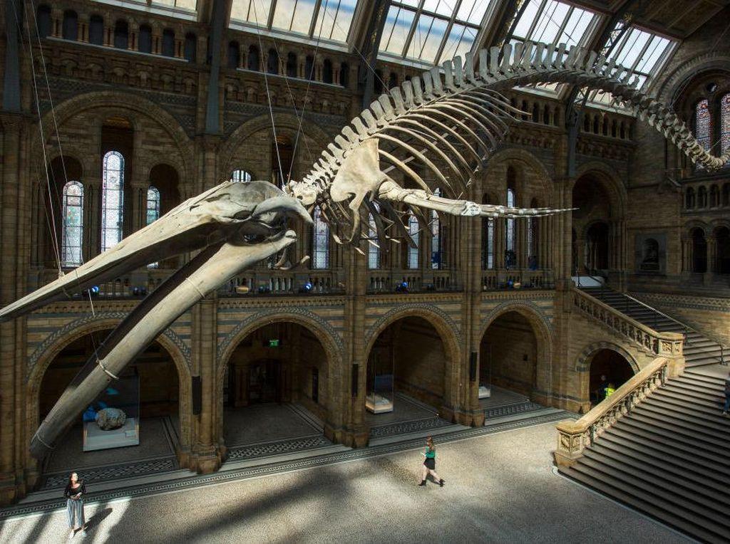 Ini Lho Museum Kerangka Hewan Terbesar di Dunia