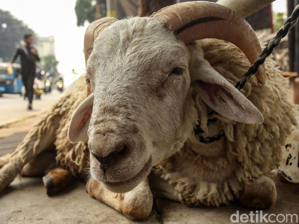 Menag: Penyembelihan Kurban di Tempat Terbuka, Daging Diantar ke Rumah