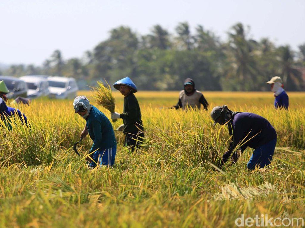Pertanian RI Perlu Digenjot Lewat Cara Ini